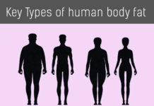 Types of human body