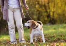 Get Your Dog Walking to Get These Health Benefits